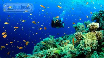 Diving İn Bogazkent
