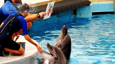 Dolphin Show From Serik