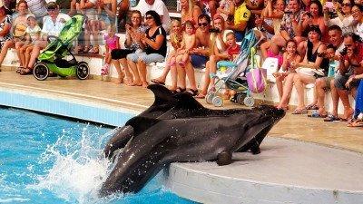 Yunus Balıkları Gösterisi