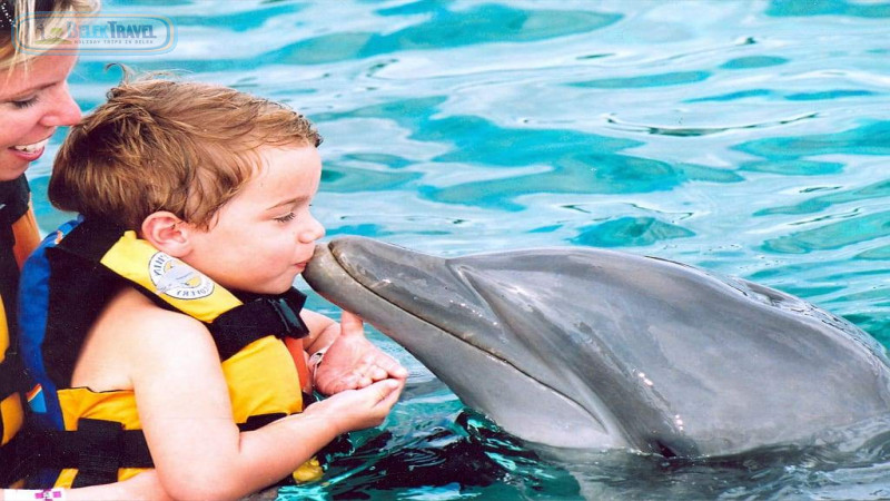 Swimming With Dolphin